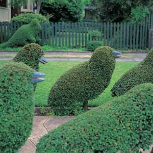 how-to-create-topiary0