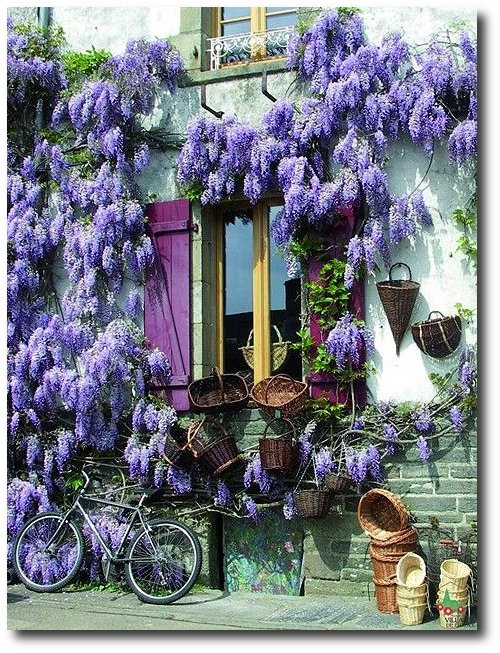Wisteria Burgundy France Decorate With Bright Pops Of Color In Your Home
